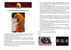 Strassenhunde kastrieren-page-0-horz (Large)