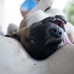 Dogs_eye_view