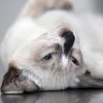 Sleeping_cats4