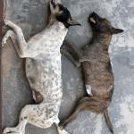 Sleeping_dogs_1