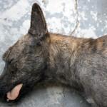Sleeping_dogs_2