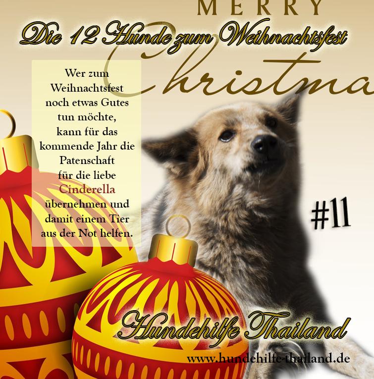 12 Dogs Cinderella