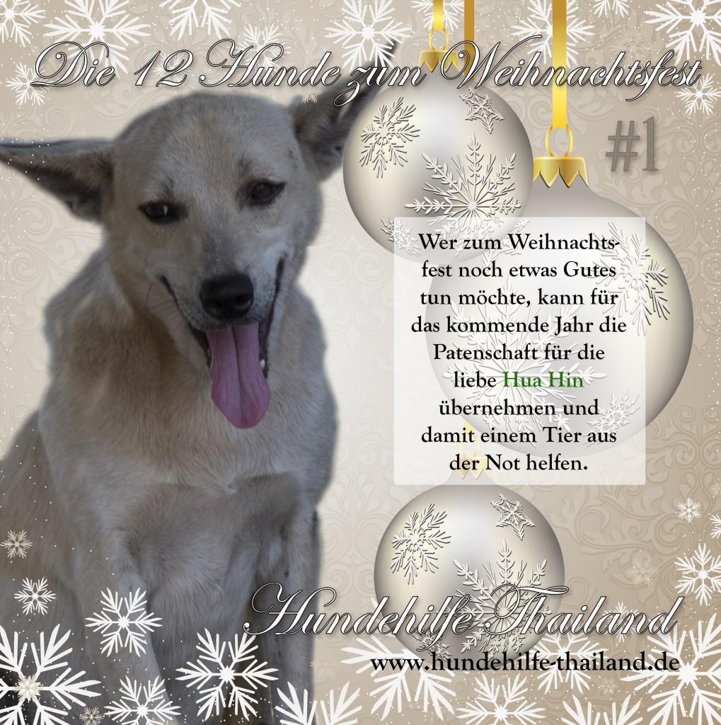 12 dogs Hua Hin german