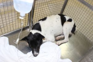 Dido in der Tierklinik