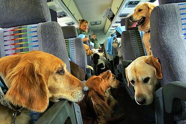 dogs-on-a-plane