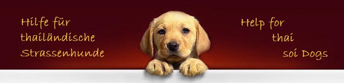 hundehilfe-thailandxxx