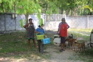 Kastration in thailand freiwillige kastration :