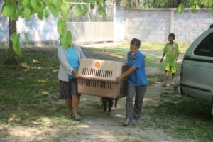 Freiwillige kastration in thailand